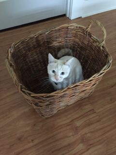 Chakko in a Basket